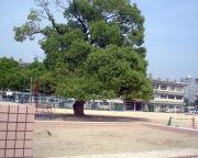 広島市立三篠小学校