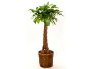 観葉植物(花なし)