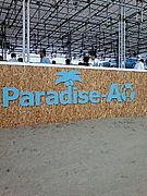 ☆paradiseAO 2008☆