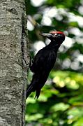 北海道Birders