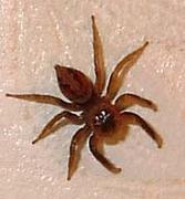 蜘蛛が好きな人っ!