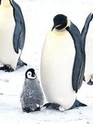 ペンギン消防隊