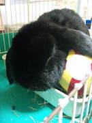 ぶちゃウサギが好き!