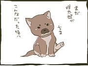 柴犬週報(改・日報)