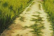 ベトナム戦争の小径