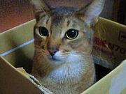 猫は箱が好き(´▽`)