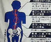 Chiropractic Tanpopo