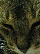 【CAT'S☆AI】バスケin川越