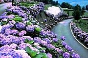 宮崎県東臼杵郡北郷村。