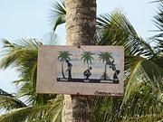 西アフリカ情報