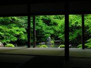 京都の熱帯魚屋さん