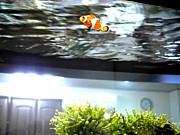 日本海水魚飼育専門学院