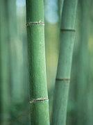 ソフバ-Bamboo