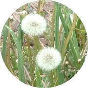 慢性鼻炎+アレルギー咳