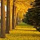 秋が好き♪