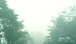 霧雨が好き。