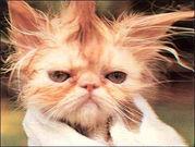 猫画像 on line