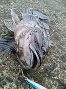 新潟を釣る!