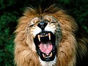 亜細亜の獅子達