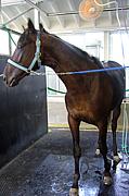 マナクーラ (競馬)