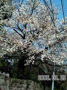 桜坂の人々