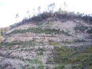 倒木と間伐材の処理対策を考える