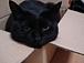 黒猫同好会