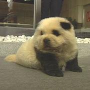 パンダ犬を愛する会