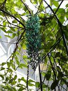 板橋区立熱帯環境植物館