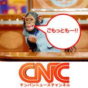 チンパンニュースチャンネル. | ...