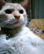 デブ猫よ、われが好きなんじゃ!