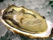 牡蠣が好き in 札幌