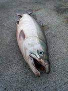釣り大好き!北海道