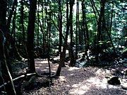 アルヴィオン 青木ヶ原