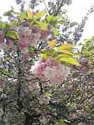 木花咲耶姫様からの神示