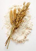 小麦っ子倶楽部
