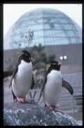 葛西臨海水族園 が好きなので…