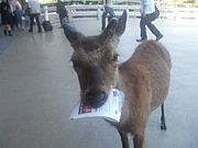 Bambiに集まれ!!