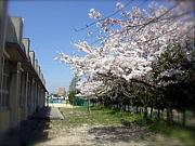 '97卒 桜中部