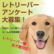 ドッグデイズ  愛犬撮影会!