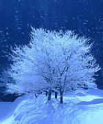 雪の降る・・冬が好き。
