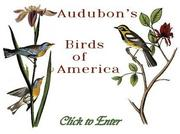 Audubon(オーデュボン)の絵