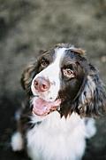 テンカン発作犬との暮らし