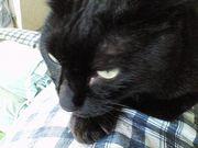 黒猫の名前はクロ