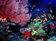 鹿児島ダイビング