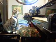 湘南ピアノの会@神奈川県藤沢市