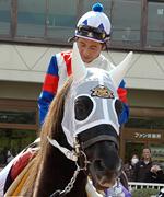 アラブのお馬