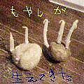 ジャガイモからモヤシが生えた。