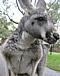 オーストラリアワーホリと自ご飯