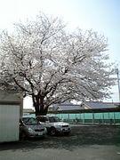 秦野高校☆2006.3.3☆卒業式
